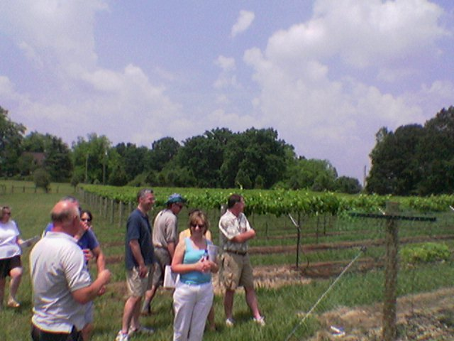 Members learn about planting vines